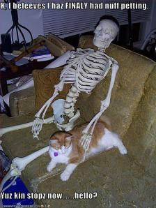 funny-pictures-cat-has-finally-had-enough-petting
