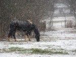 The horse next door. I liked that you could actually see the snow coming down.